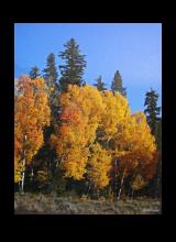 yellowstone-3.png