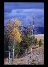 yellowstone-6.png